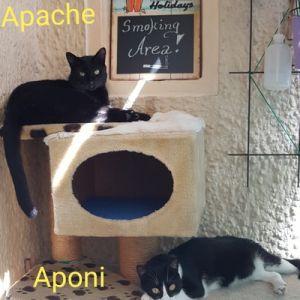 apache_und_co_04