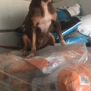 feed-a-dog_04