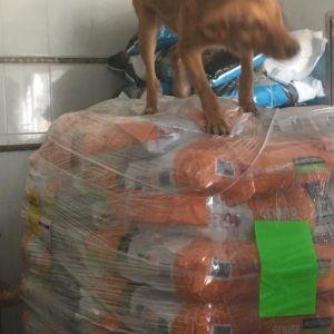 feed-a-dog_10