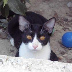 cat81