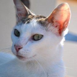 cat90