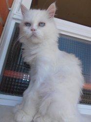 cat94