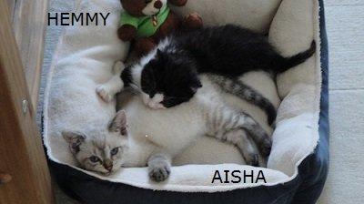 hemmy&aisha45