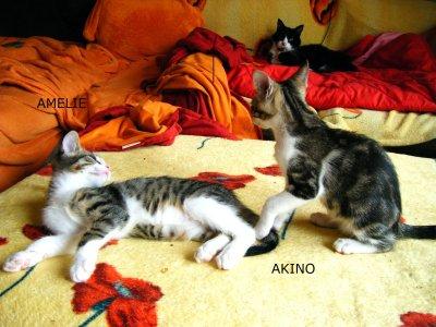 amelie-und-akino