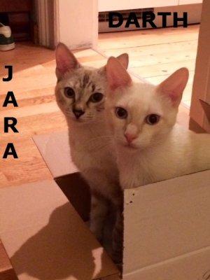 dj_jara+darth9