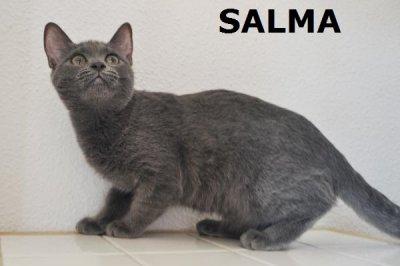 ss_salma-3