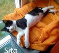 Sito1